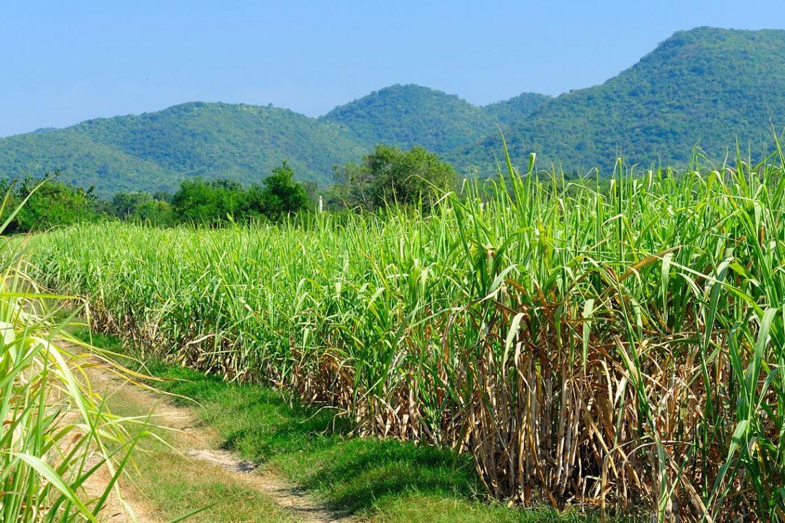 Sugar production process